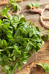 Raw Organic Fenugreek Methi Leaves