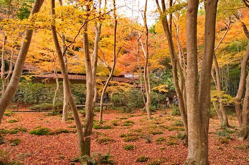 【写真】2012 紅葉 : 祇王寺/2021-09-05/IMGP7853