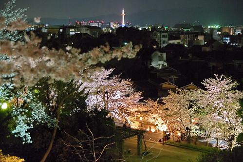 【写真】桜 : 高台寺(2)