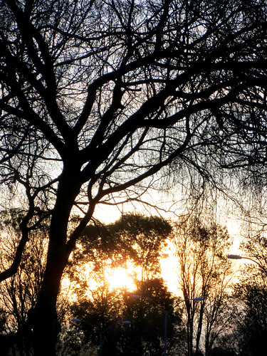 Tree Branches and Sunset