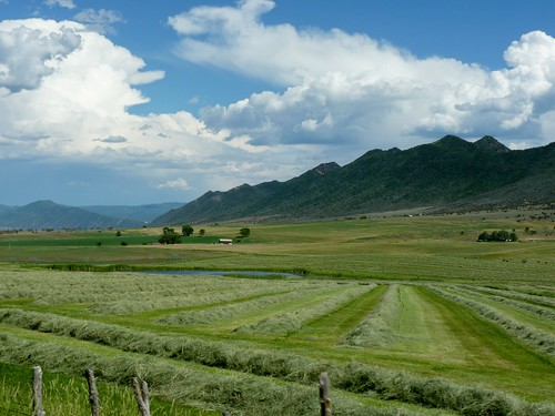 summer mountains green field pond bluesky rows hay