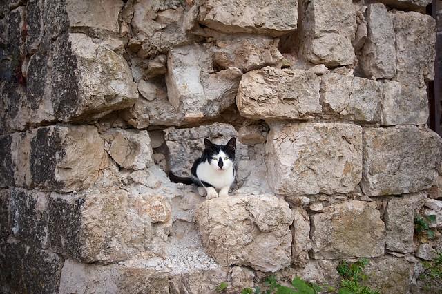 Dubrovnikin sotamuseon kissa