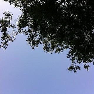 すっかり快晴になった #sky #イマソラ