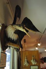 Kaua'i : Natural History Museum!