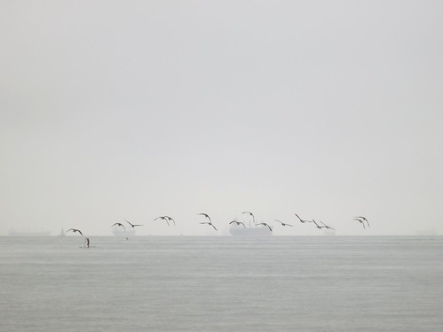 Geese and ghost ships