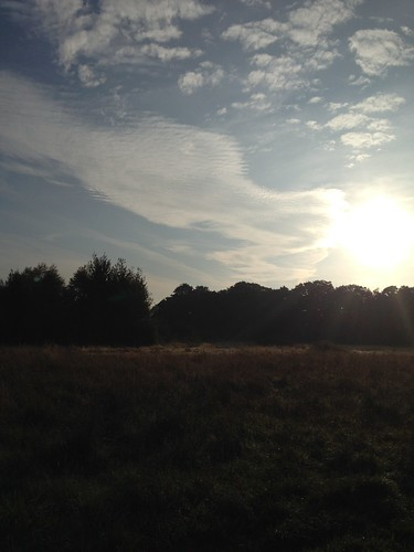 Epping Forest - Hollow Ponds - morning run