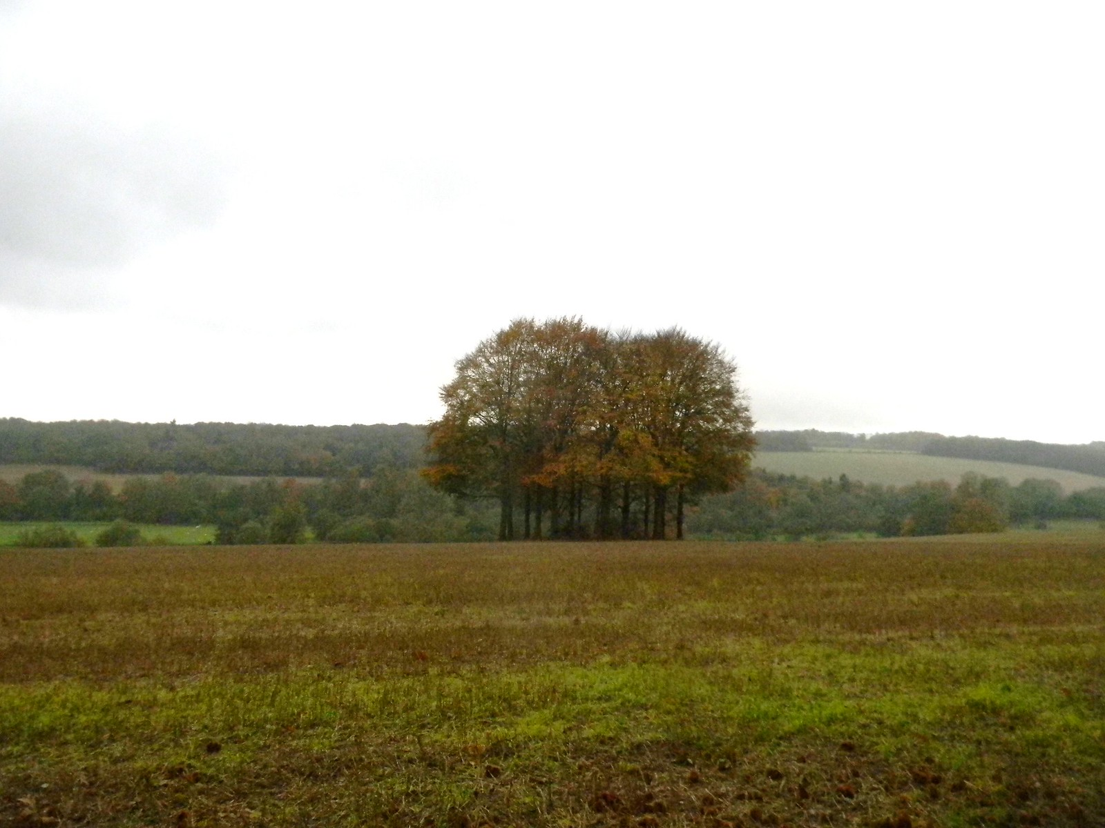 Copse Chorleywood to Chesham
