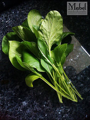 First choy sum harvest