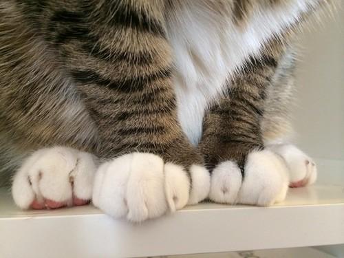 Amelia's paws
