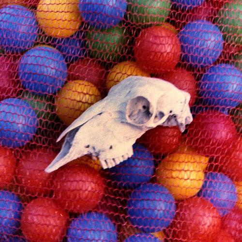 skull & balls by pho-Tony