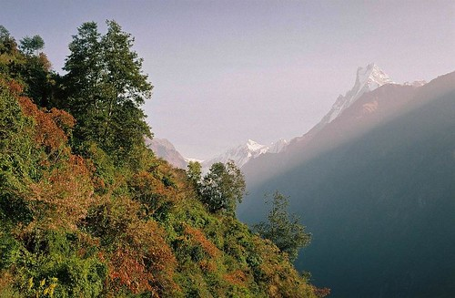 nepal mountain 3 fish tree 2004 analog trekking trek landscape iii tail peak valley round summit himalaya annapurna sanctuary modi annapurnas canoneos300 chhomrong machhapuchhre khola machapuchare machhaphuchhare