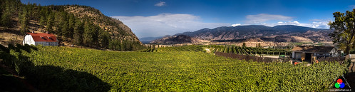 Okanagan Valley Vinyard, Canada by Douglas Remington - Ethereal Light® Photography