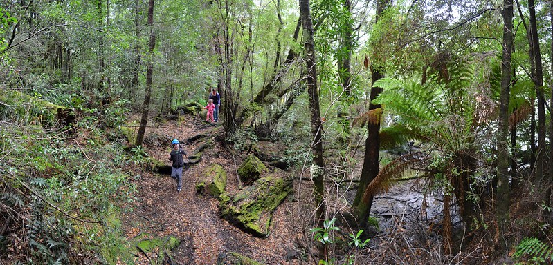 Hiking alongside the Pieman River on the Whyte River Walk - Tarkine Wilderness - Corinna - Tasmania