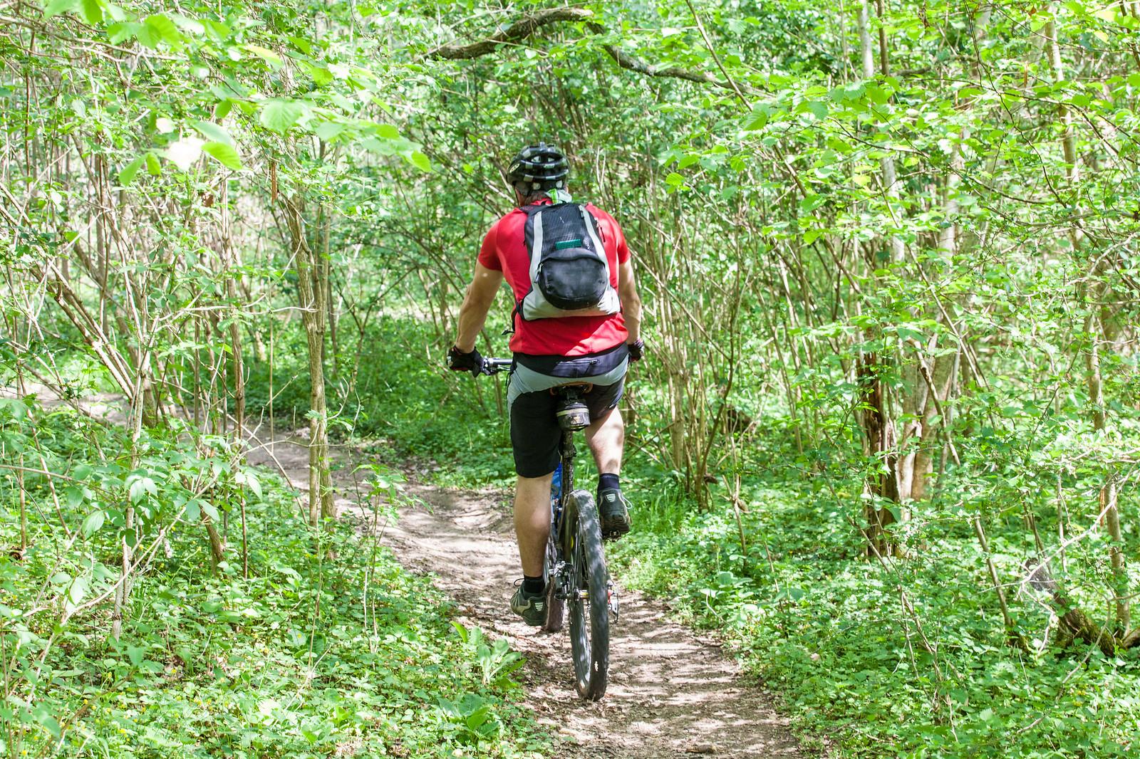 Mountain Biken im Wald
