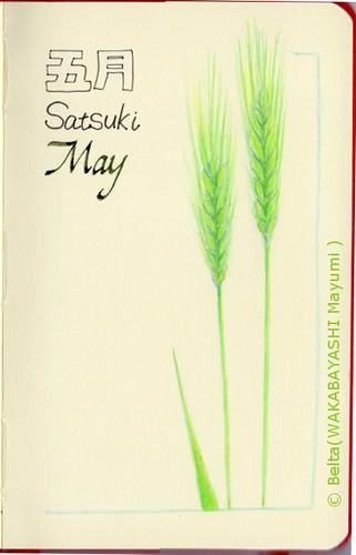 2014_05_01_wheat_01_s