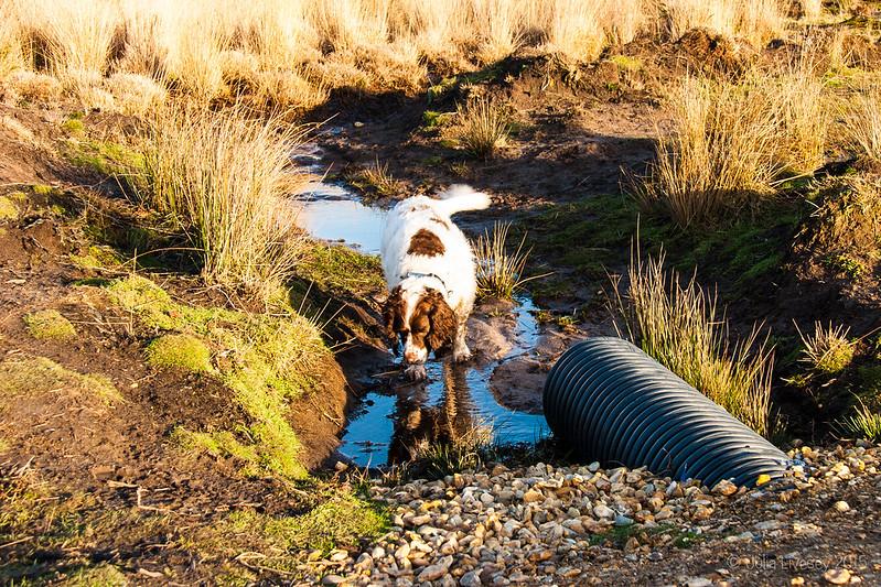Max in a ditch