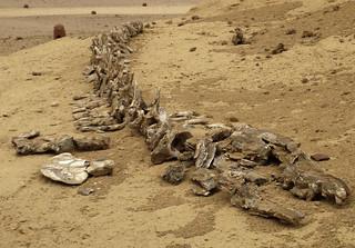 Wadi2-25