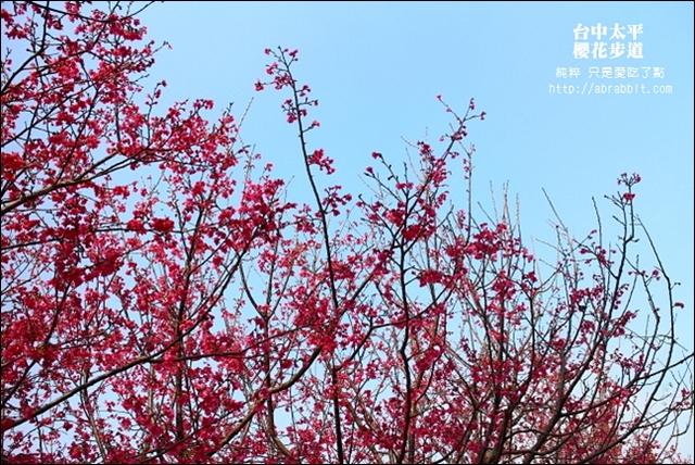 [台中太平]太平的櫻花祕境:麗園公園櫻花步道