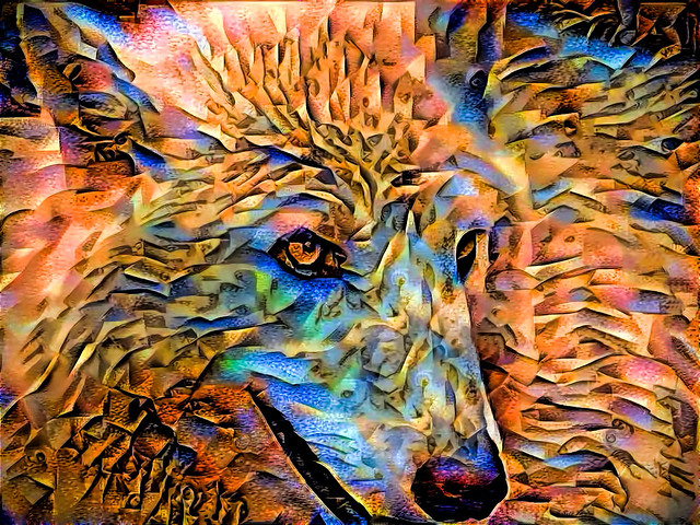 into the wild: wolf