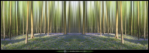 flowers trees light sun green grass forest canon spring purple belgium belgique magic belgië surreal bark erlend halle enchanted hallerbos hyacints erroba robaye 5dmarkiii