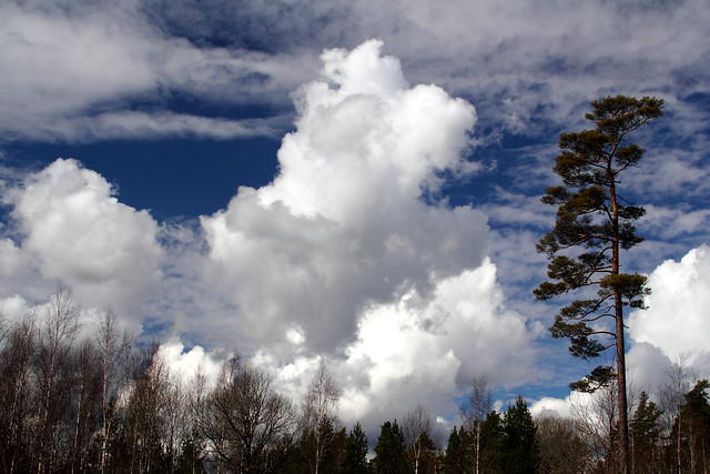 Swedish Clouds