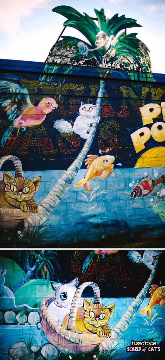 petstore cat mural