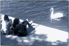 137/365 Girls and Swan