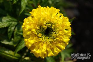 Gekräuselte Blüte