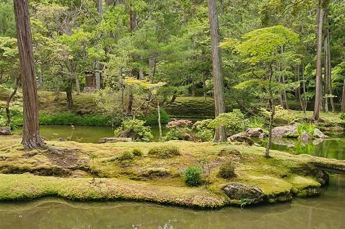 【写真】青葉 : 西芳寺(苔寺)