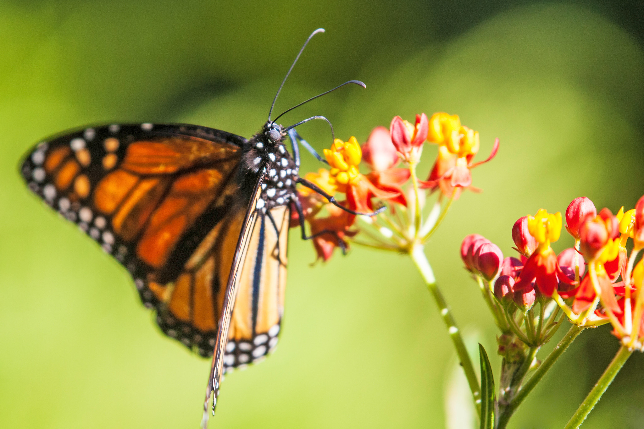 Monarch Butterfly Viewing In Mexico Bed And Breakfasts