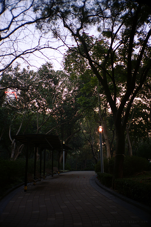 dusk in park