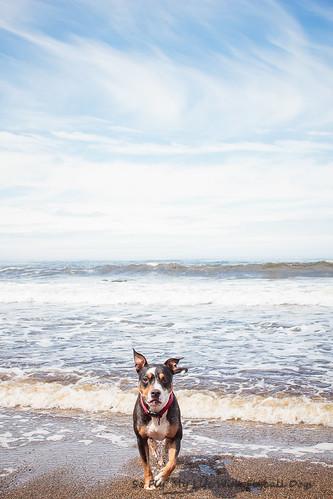 Beach Trip-8577