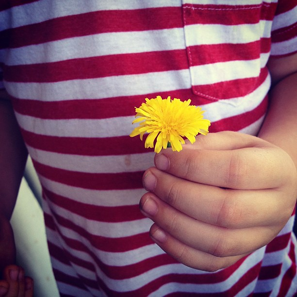 I never appreciated the humble dandelion until I became a Mama. Now they seem such bright and happy flowers, hardly a weed at all. I have a dish full of dried dandelions that Cohen has picked for me. With each flower gift he tells me he loves me. It's lik