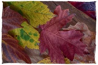 Y- Yuxtaposición... de colores otoñales.