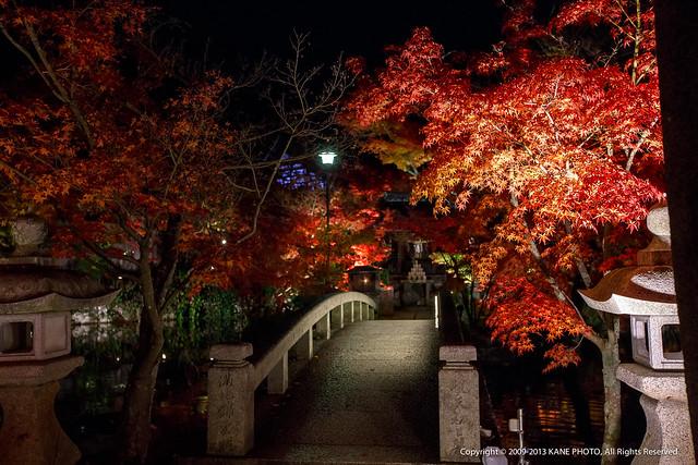 20121124-980C1971-永觀堂夜觀