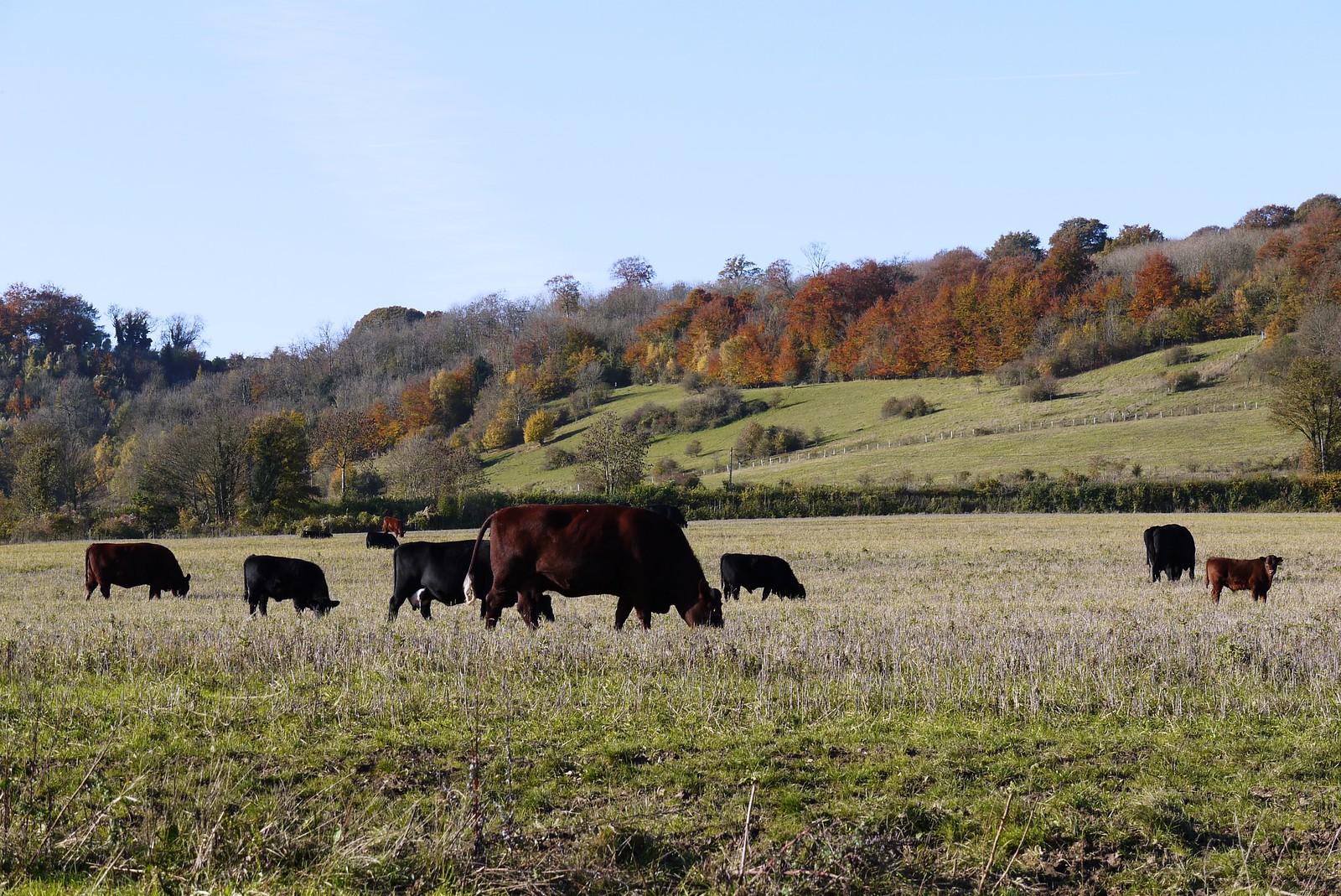 Filston Farm Otford to Eynsford
