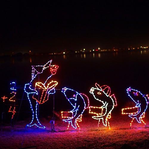 #school of #fish  at #moodygardens #igtexas #festivaloflights #Christmas #lights #latergram