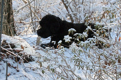 suzie with chewie  in the snow