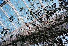 창경궁 대온실(greenhouse)