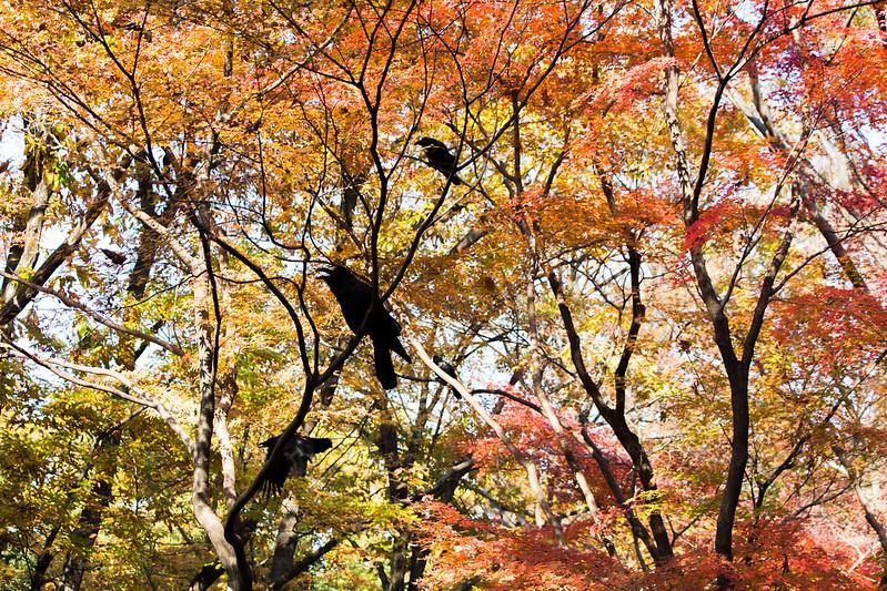 kitanomaru-park-6
