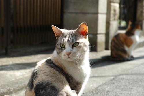 cat 猫