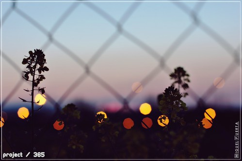 sunset canon lights luces bokeh f14 granada crepusculo 2014 ef50mm project365 mpuerta