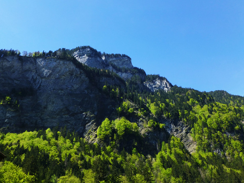 Tree-covered cliff