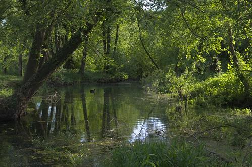 river landscape stream may croatia turopolje siget pentaxk5 novočiče vedranvrhovac