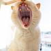 Harvey (Big Scary Tiger Mode) by Dibbly Dobbler