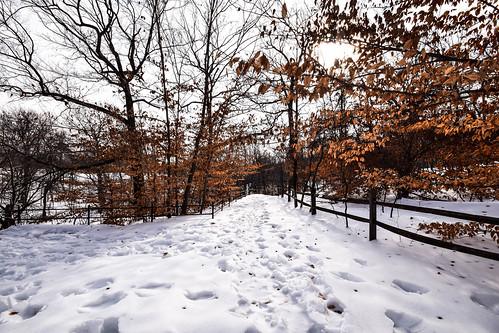 nyc newyorkcity winter snow garden landscape botanical woods nikon walk bronx nieve invierno thebronx february sigma1020mm newyorkbotanicalgardens nikond3300