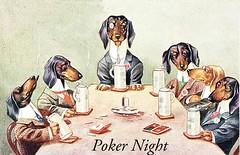 dachshund poker