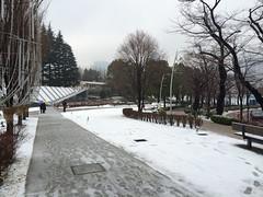 2015/1/30の雪いろいろ
