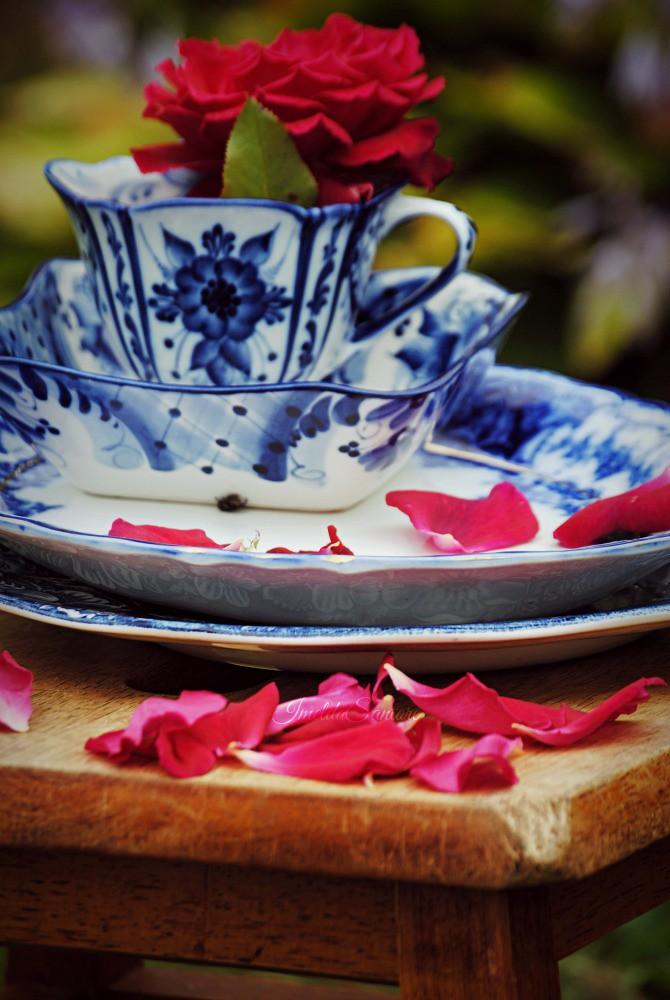 Teacup and petals