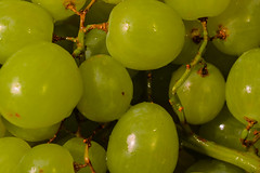 49/365 Ball Trilogy Vol. 3: Grapes, February 18